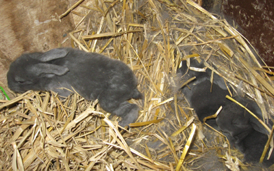konijntjes(7)